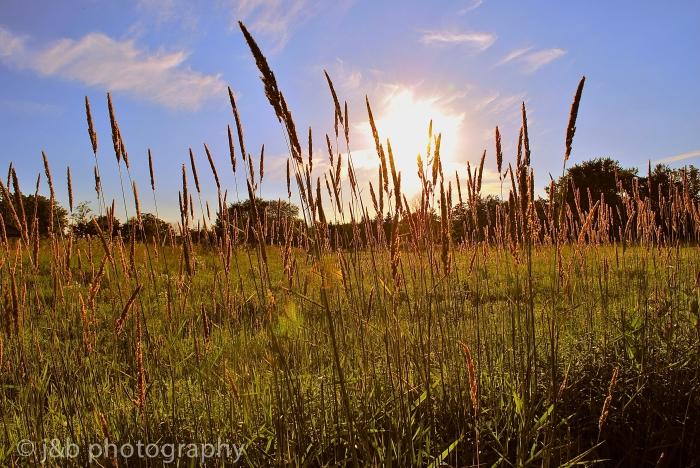 3 Grass Sun