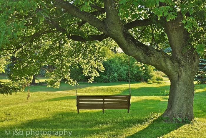 4 Tree Swing